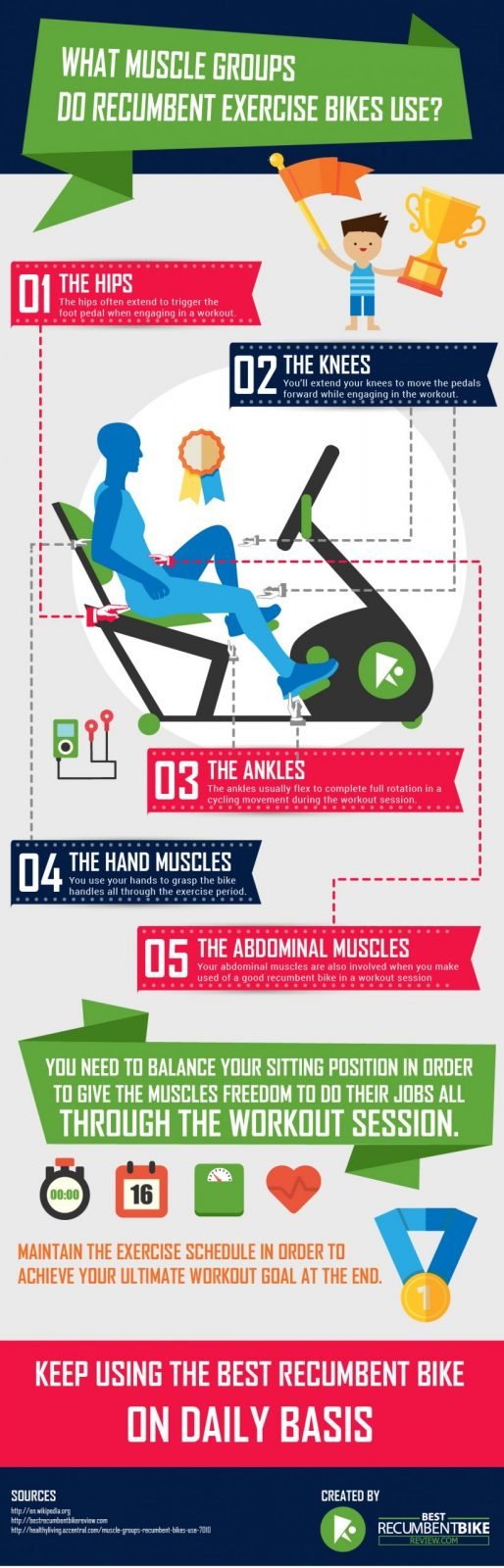 Infographic What Muscle Groups Do Recumbent Exercise Bikes Use scaled - Infographic - What Muscle Groups Do Recumbent Exercise Bikes Use?